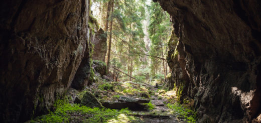 Exit to the forest from the dark rocky cave, natural photo background