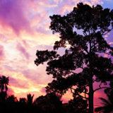 Big tree on the beauty sunset sky background