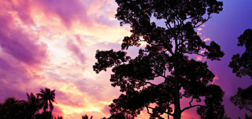 Big tree on the beauty sunset sky background